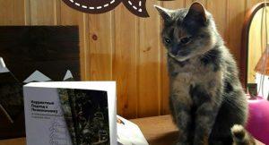 Навіть коти вивчають коректний підхід