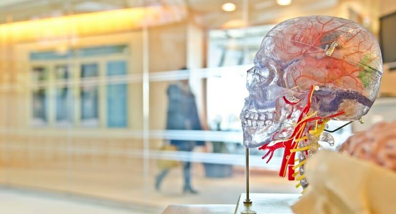 Почему хирурги до сих пор используют нацистский атлас по анатомии