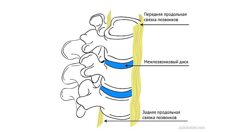 Блокирование позвоночного сегмента — защитный механизм позвоночника