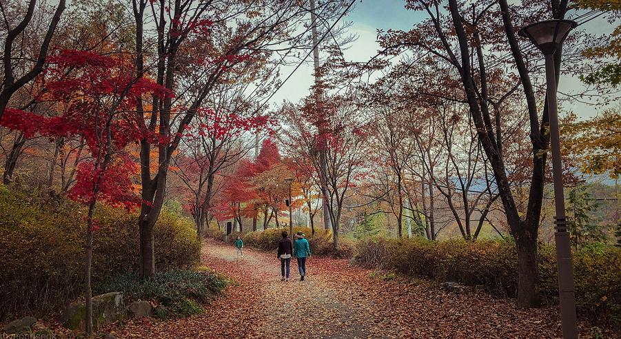 Прогулка в парке - безопасная альтернатива стойки на голове