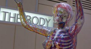 Ключевая дисфункция в остеопатии