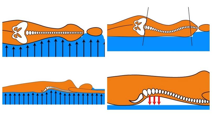 Ортопедический матрас и функциональная интеграция